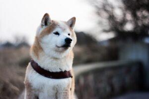 Dogecoin koers